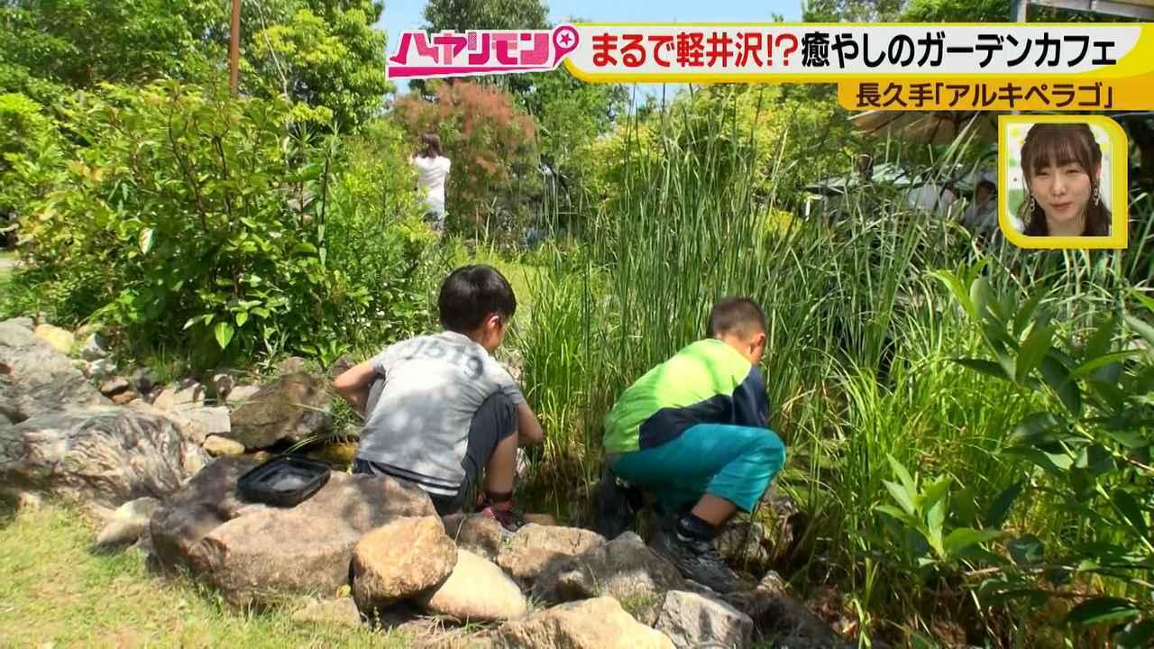 画像7: お庭が選べる?!軽井沢気分にひたれる癒しのガーデンカフェ♪