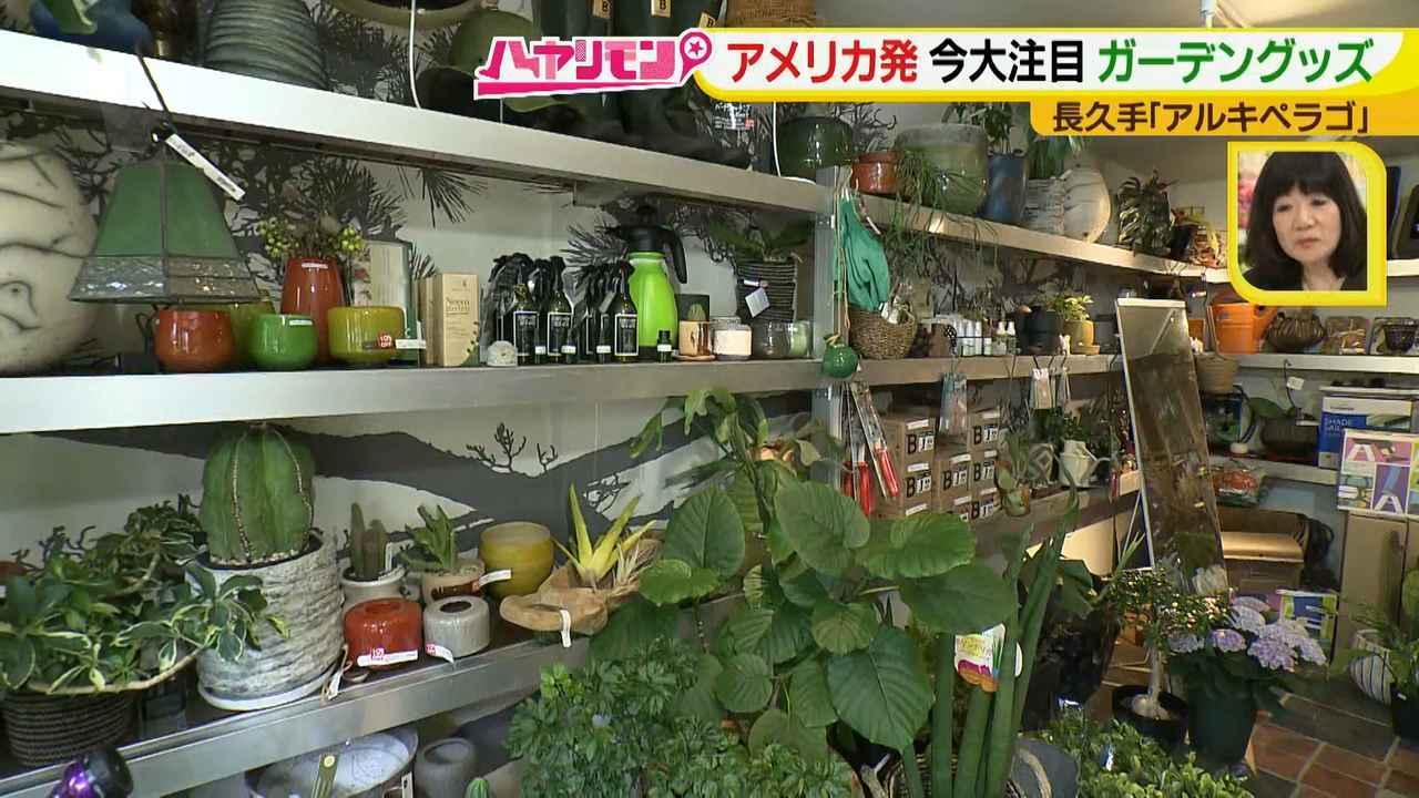画像10: お庭が選べる?!軽井沢気分にひたれる癒しのガーデンカフェ♪