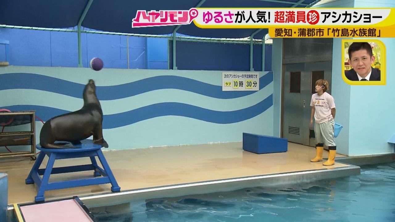 """画像12: 小さくても大人気の水族館!ショーはアシカの気分次第♪ """"らしさ""""を楽しむナイトアクアリウムは来月開催!"""