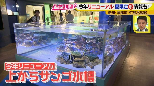 """画像3: 小さくても大人気の水族館!ショーはアシカの気分次第♪ """"らしさ""""を楽しむナイトアクアリウムは来月開催!"""