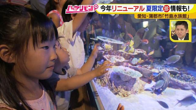 """画像4: 小さくても大人気の水族館!ショーはアシカの気分次第♪ """"らしさ""""を楽しむナイトアクアリウムは来月開催!"""