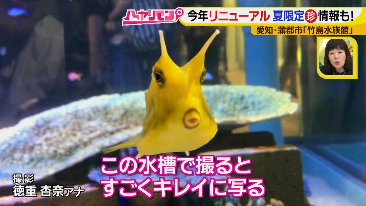 """画像6: 小さくても大人気の水族館!ショーはアシカの気分次第♪ """"らしさ""""を楽しむナイトアクアリウムは来月開催!"""