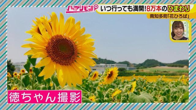 画像2: インスタ映えのお花畑がリニューアル♪ 夏休みに行きたい!新しい南知多