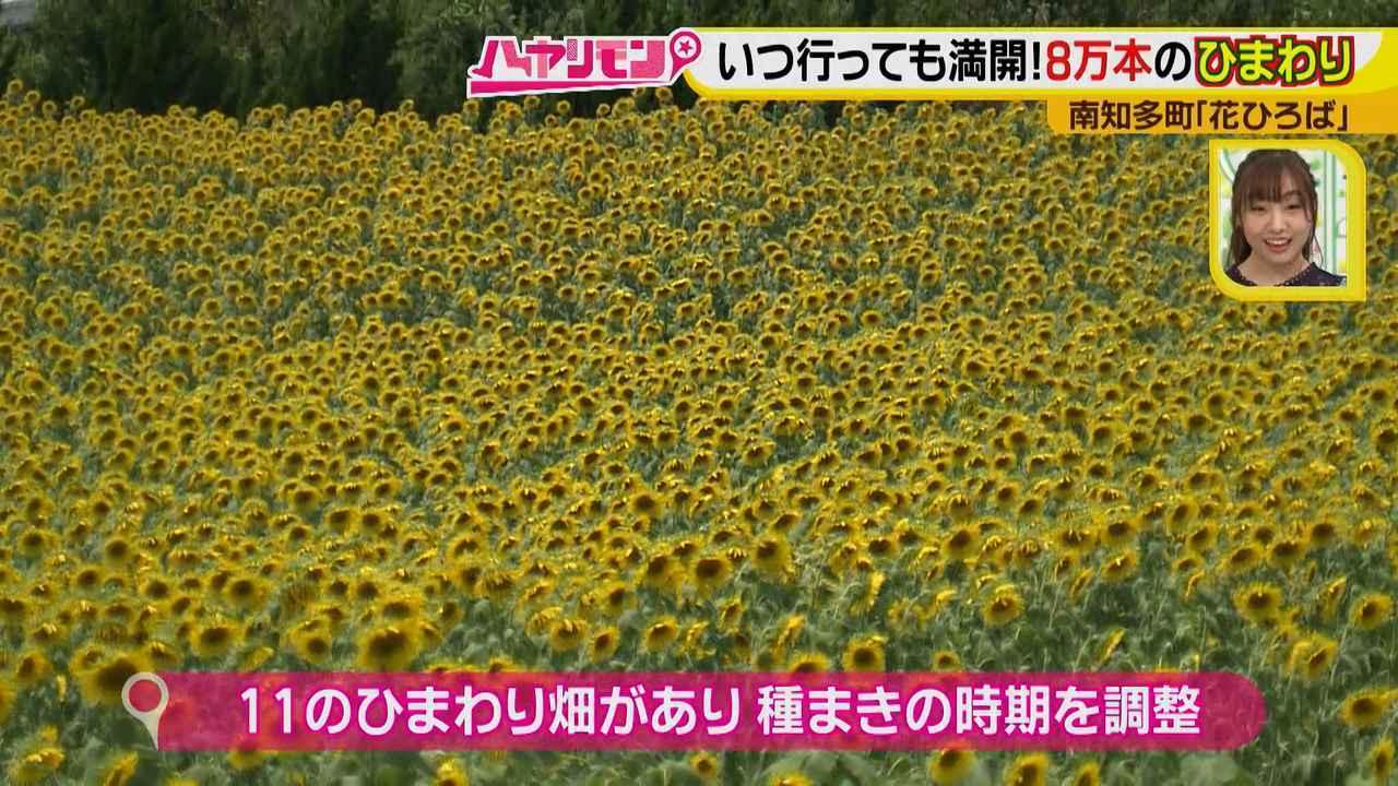 画像4: インスタ映えのお花畑がリニューアル♪ 夏休みに行きたい!新しい南知多