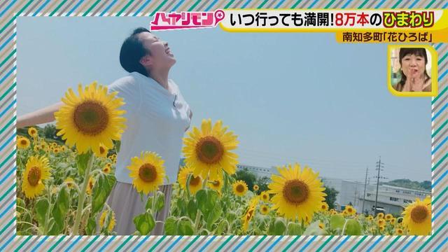 画像1: インスタ映えのお花畑がリニューアル♪ 夏休みに行きたい!新しい南知多