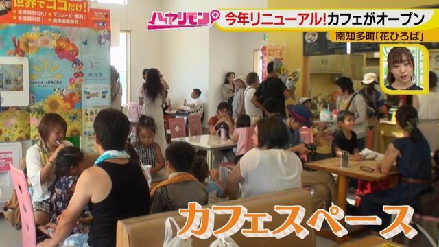 画像5: インスタ映えのお花畑がリニューアル♪ 夏休みに行きたい!新しい南知多