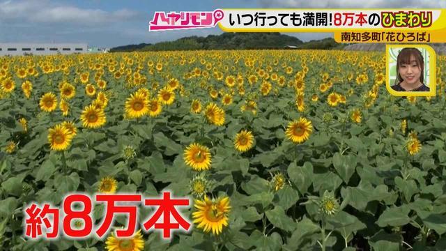 画像3: インスタ映えのお花畑がリニューアル♪ 夏休みに行きたい!新しい南知多