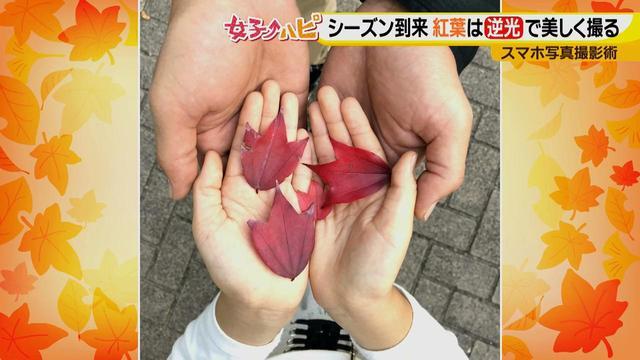 画像9: この秋使えるスマホ写真術!in東山動植物園 紅葉を撮る位置は?失敗した写真の救済策も♪