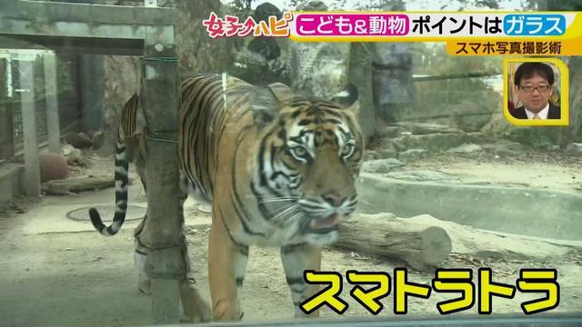 画像4: この秋使えるスマホ写真術!in東山動植物園 こども&動物の2ショットを楽しく撮るコツ♪