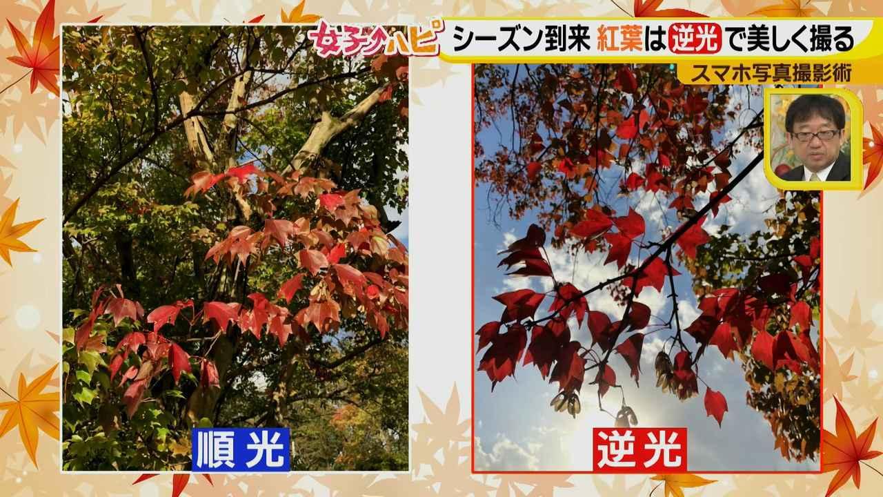 画像3: この秋使えるスマホ写真術!in東山動植物園 紅葉を撮る位置は?失敗した写真の救済策も♪