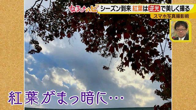画像4: この秋使えるスマホ写真術!in東山動植物園 紅葉を撮る位置は?失敗した写真の救済策も♪