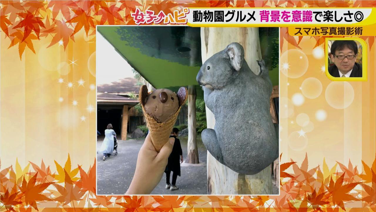 画像4: この秋使えるスマホ写真術!in東山動植物園 グルメ写真は背景を♪人物写真は足位置を意識して♪