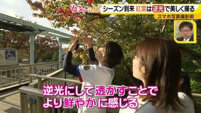 画像2: この秋使えるスマホ写真術!in東山動植物園 紅葉を撮る位置は?失敗した写真の救済策も♪