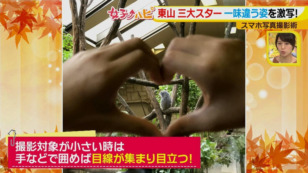 画像11: この秋使えるスマホ写真術!in東山動植物園 こども&動物の2ショットを楽しく撮るコツ♪