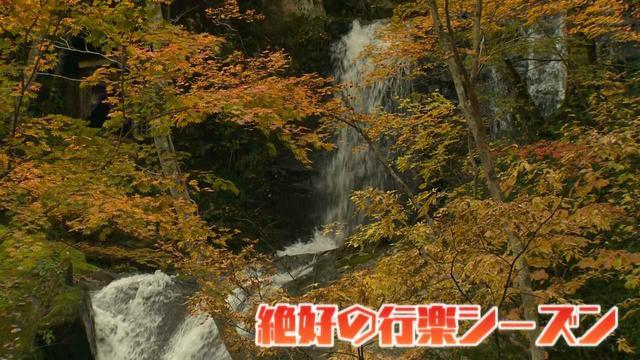 画像1: この秋使えるスマホ写真術!in東山動植物園 紅葉を撮る位置は?失敗した写真の救済策も♪