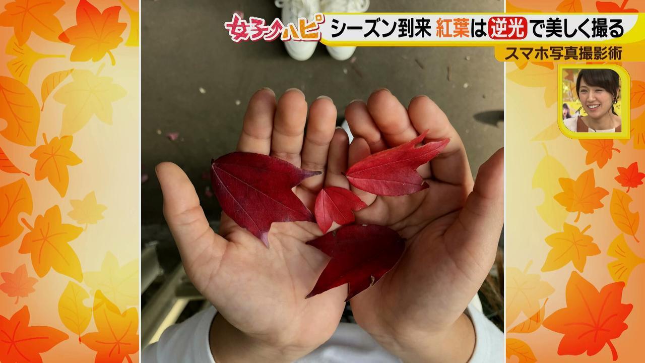 画像8: この秋使えるスマホ写真術!in東山動植物園 紅葉を撮る位置は?失敗した写真の救済策も♪
