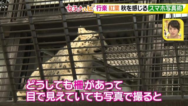 画像3: この秋使えるスマホ写真術!in東山動植物園 こども&動物の2ショットを楽しく撮るコツ♪