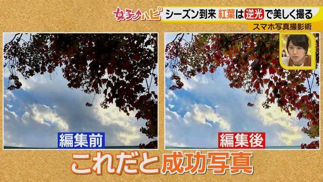 画像5: この秋使えるスマホ写真術!in東山動植物園 紅葉を撮る位置は?失敗した写真の救済策も♪
