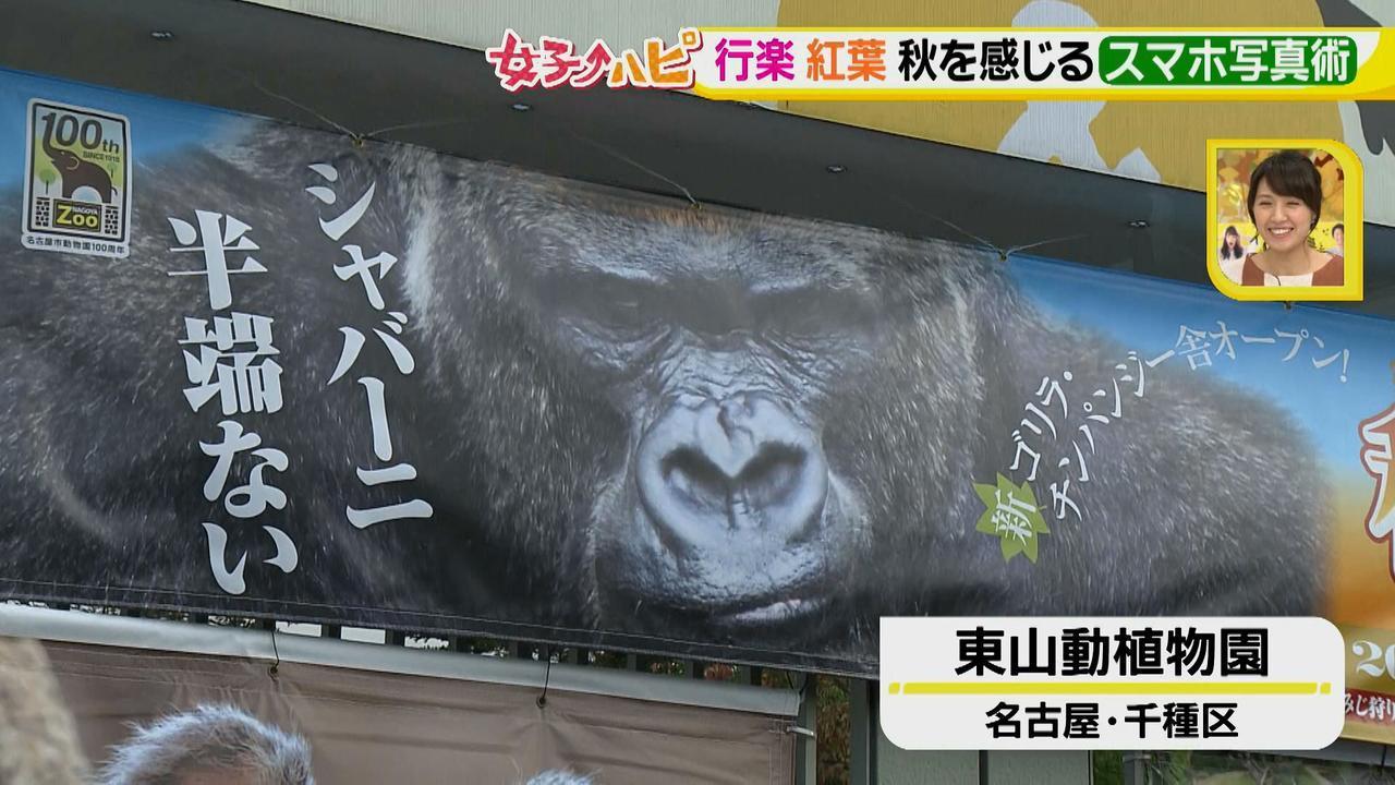 画像1: この秋使えるスマホ写真術!in東山動植物園 グルメ写真は背景を♪人物写真は足位置を意識して♪