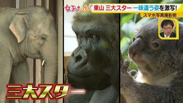 画像7: この秋使えるスマホ写真術!in東山動植物園 こども&動物の2ショットを楽しく撮るコツ♪