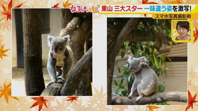 画像12: この秋使えるスマホ写真術!in東山動植物園 こども&動物の2ショットを楽しく撮るコツ♪
