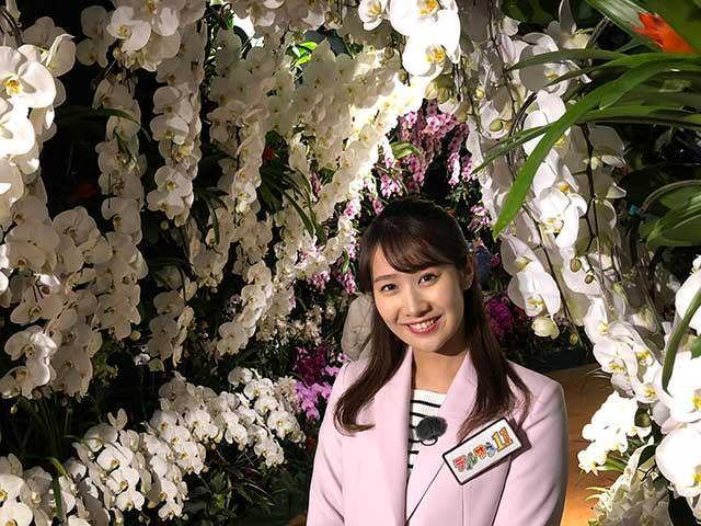 画像: 約200品種が咲き誇る大胡蝶蘭展