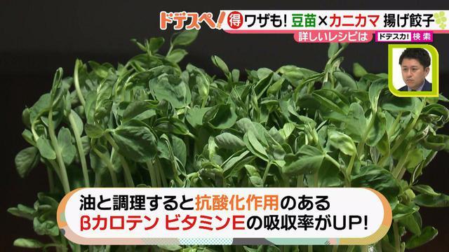 画像7: 野菜の価格高騰にも負けない! コスパ&栄養抜群、簡単おいしい揚げ餃子レシピ♪