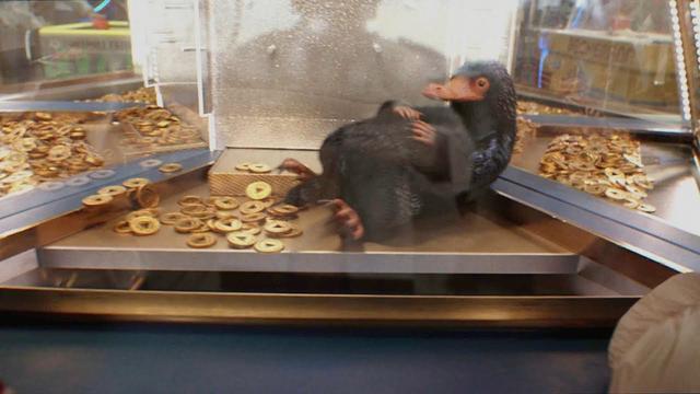 画像: 『ハリー・ポッター:魔法同盟』 魔法の痕跡レポート ニフラー編 youtu.be