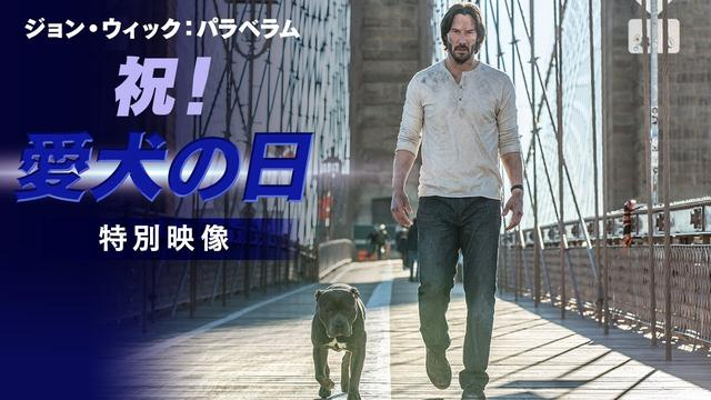 画像: 「ジョン・ウィック:パラベラム」祝!愛犬の日 特別映像 youtu.be