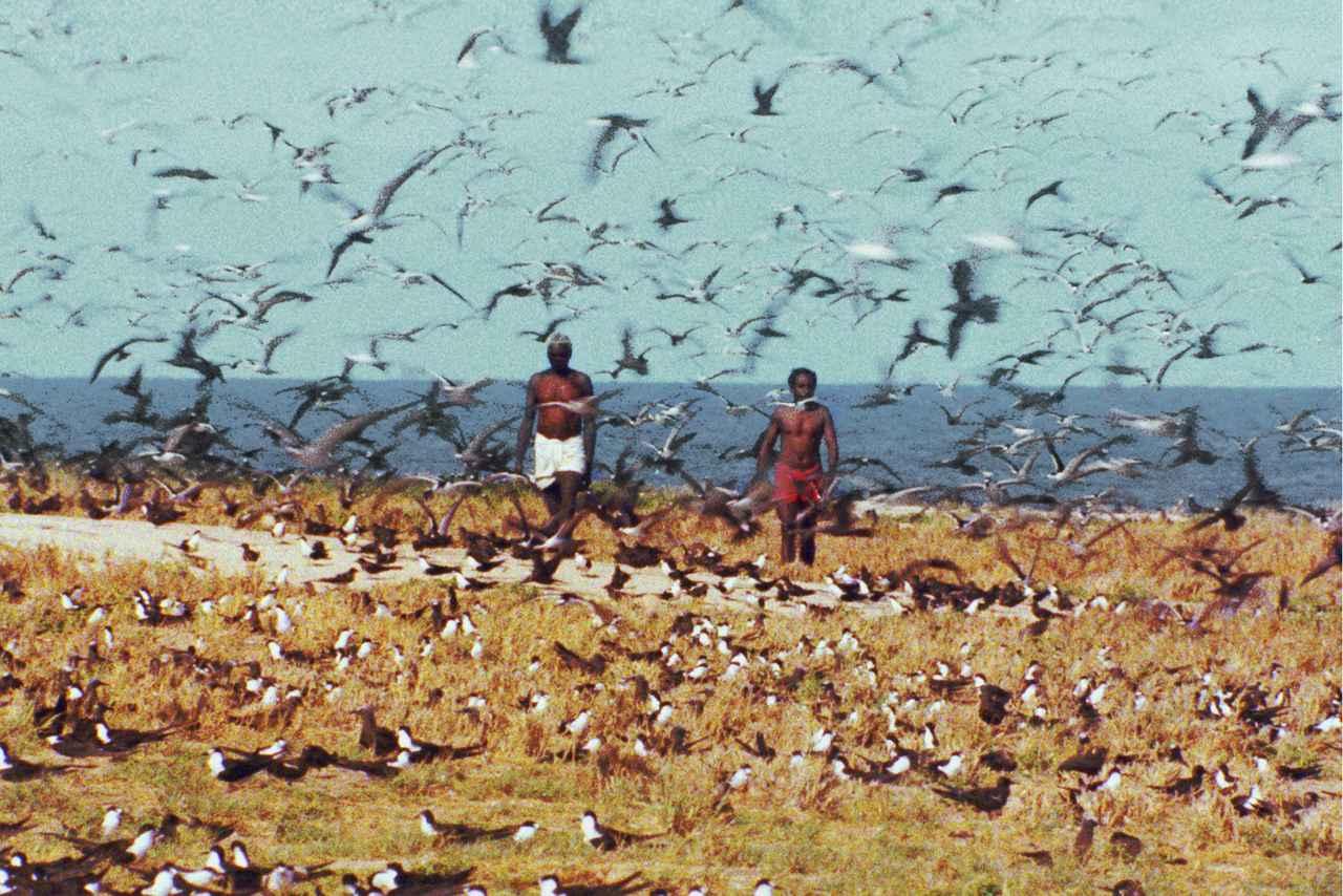 画像: 「世界残酷物語」©RTI 1962