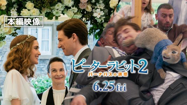 画像: 本編映像<ご祝儀は、うさキック!>『ピーターラビット2/バーナバスの誘惑』6月25日(金)全国ロードショー www.youtube.com