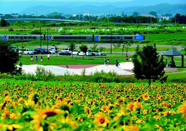 画像: 小高い丘にある道立サンピラーパーク