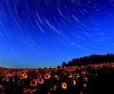 画像: 足元に広がるひまわり畑と夜空に広がる星空とのコラボレーションも圧巻だ