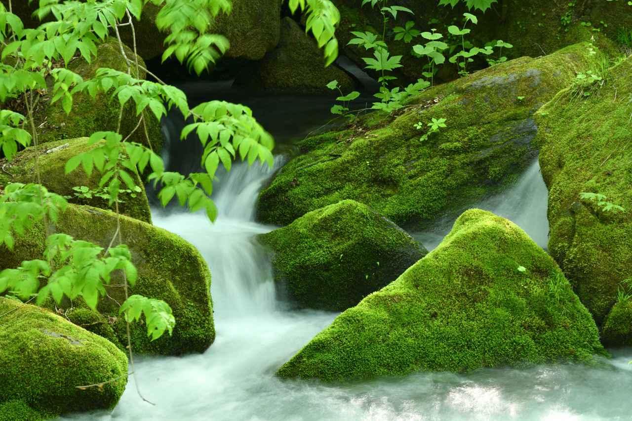 画像: 奥入瀬渓流で水の表情と新緑を捉えてみました