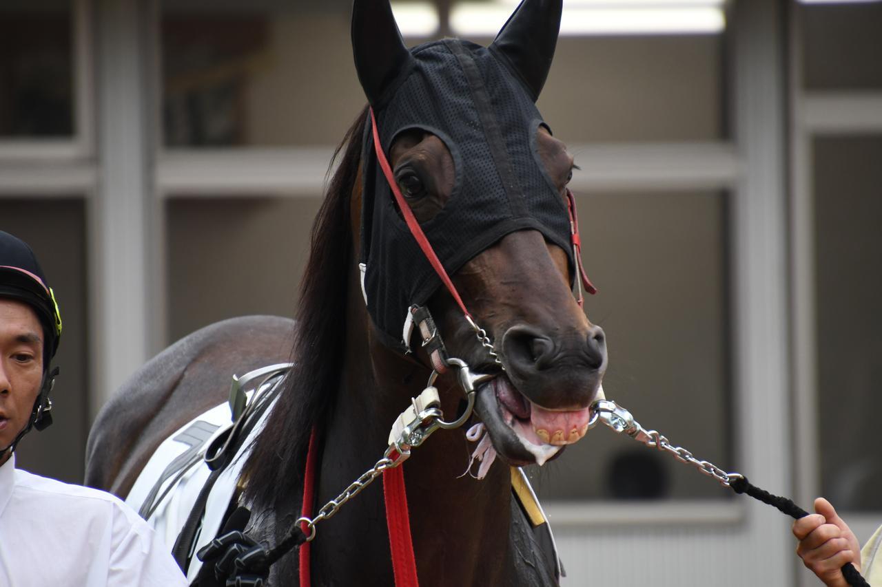 画像: パドックで狙うは馬の歯グキ