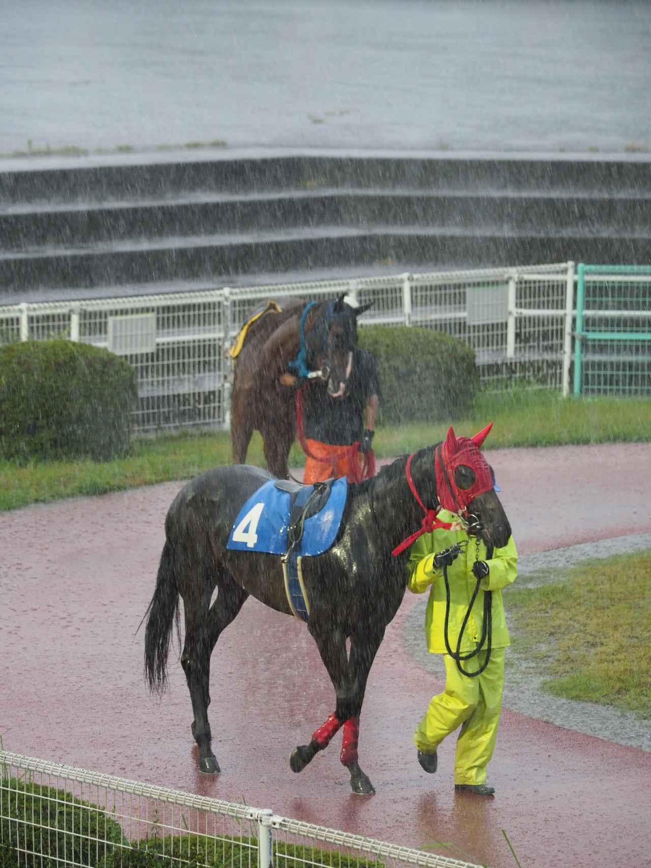 画像: お馬さんも厩務員さんもタイヘン。さすがにこのカットは屋根のある場所から撮っています。