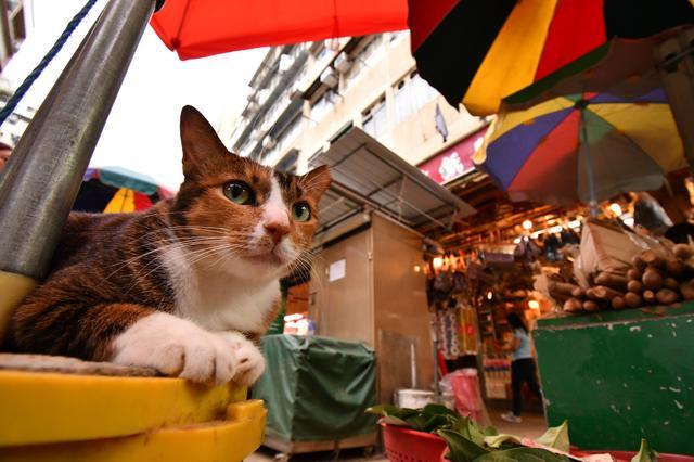 画像: ▲香港の屋台の前でくつろいでいる猫を撮る。最短撮影距離がズーム全域で0.22mなのでグッと寄って遠近感を強調して撮影できる。これだけ寄っても背景を広く入れられるのも本レンズの魅力だ。