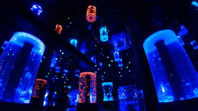 画像: ▲スチール撮影をしてみた。暗い所でも綺麗に描写しているのには驚いた!