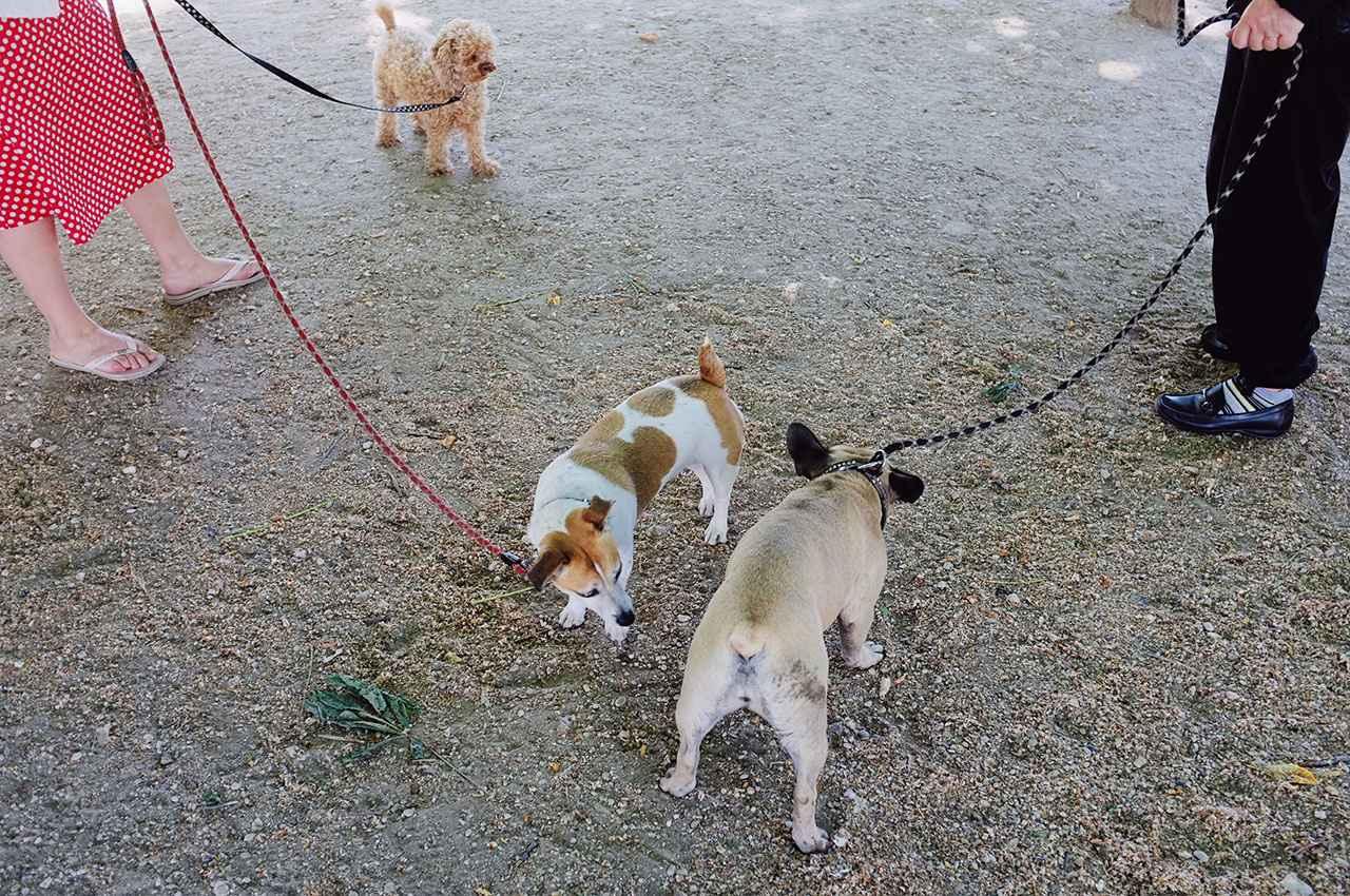 画像: ▲顔をスパっと切り取ってフレーミングすることで、かえって犬と飼い主の関係を想像できるようにしてみた。犬を繋ぐリードの色が飼い主の服の色と同じなのが面白い。■ 23mmF2 絞りF2.8 ISO800