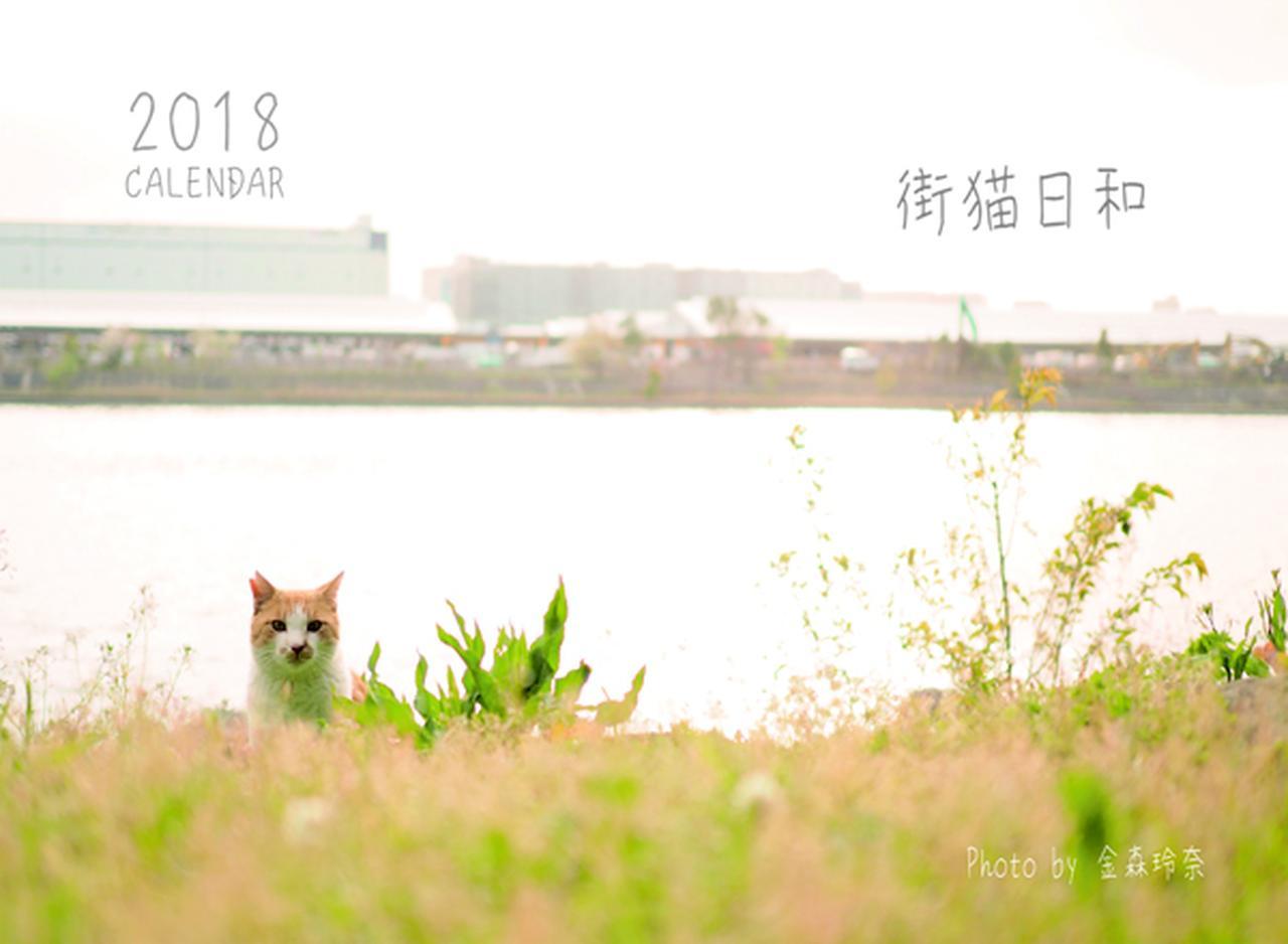 画像: ▲金森玲奈さんの「街猫日和」。 mm-style.jp