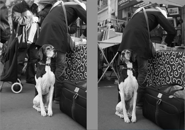 画像: 【犬】とてもチャーミングな犬を見つけて一枚目(左)。向いている方向がイマイチなのと背景がうるさくてヌケが良くないので、構図をキープしたまま背景の人がいなくなるのを期待、さらに飼い主と逆の方向を向いたところで撮ったのが二枚目。周囲の人の流れ具合と、犬の動きを観察していて、ある程度は予測できた瞬間だった。 ■フジX-Pro1 35mmF1.4 プログラムAE(マイナス0.7 露出補正) モノクロモード ISO400
