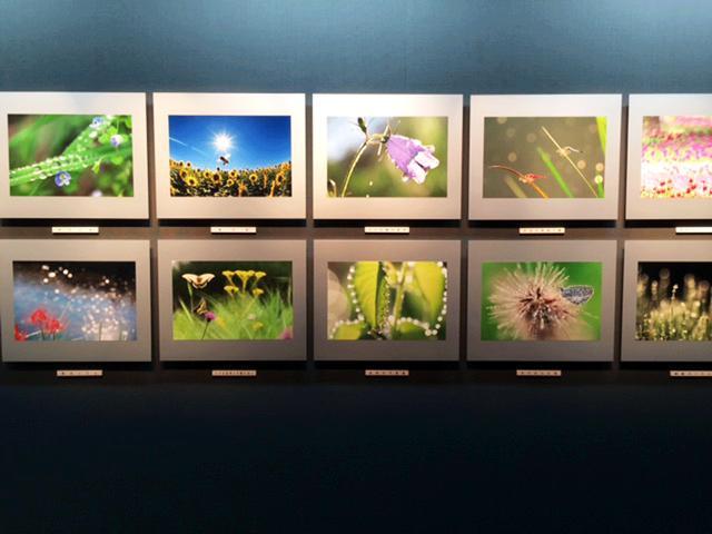 画像2: 石井孝親写真展『小さな自然との触れ合い』は、10月26日(木)~11月1日(水)まで、キヤノンギャラリー銀座で開催されます。