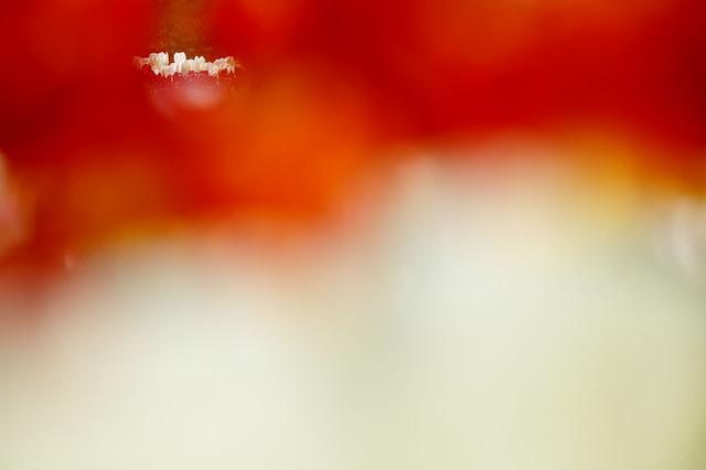 画像: ▲手前のチューリップの隙間から見える10 mほど離れた場所を狙っています。小さく入れ込むときは、その花の高さが揃っている方がすっきり見えます。■絞りF4.5