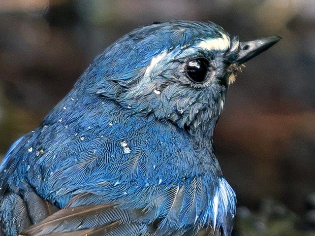 画像: ▲拡大しても羽毛や目を鮮明に捉えているのが分かる。