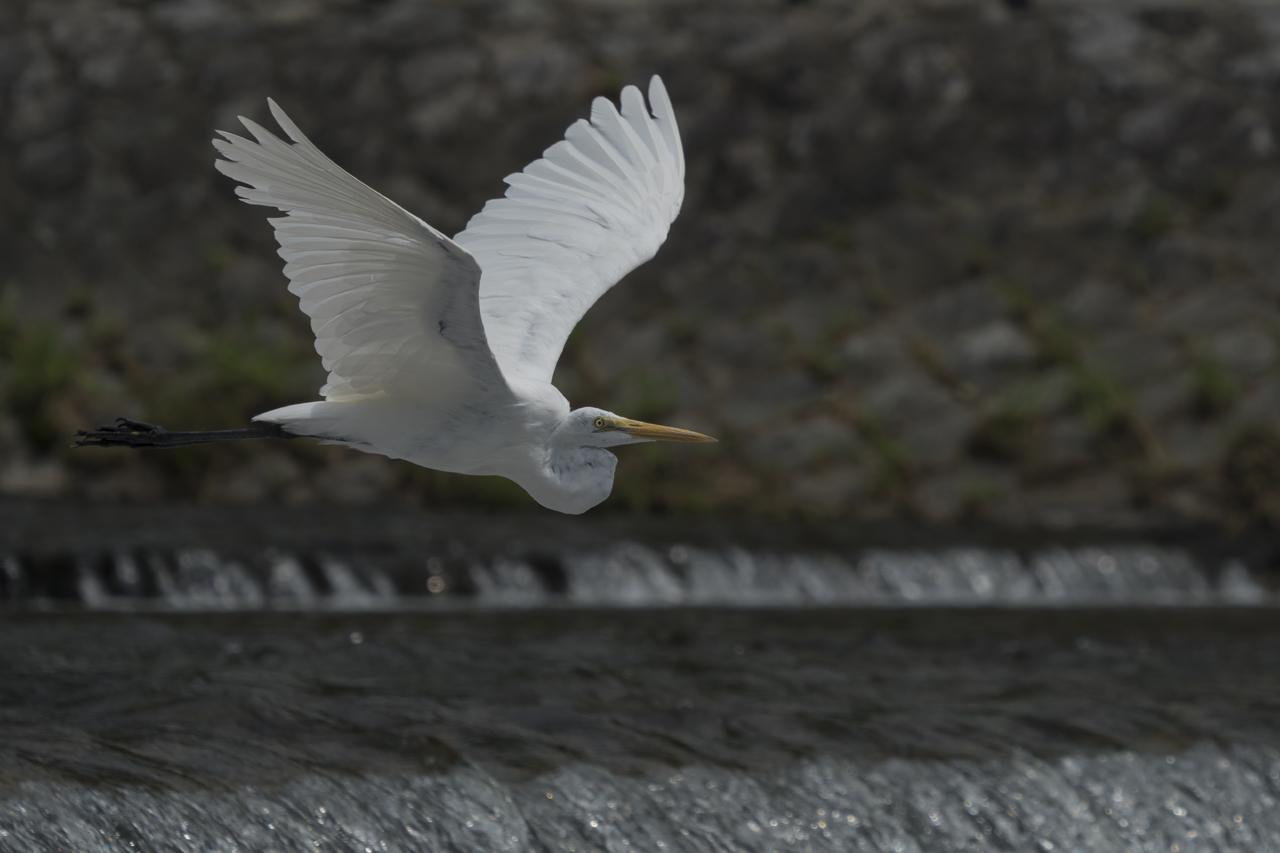 画像1: α6500なら、飛翔シーンも軽快に撮れる!