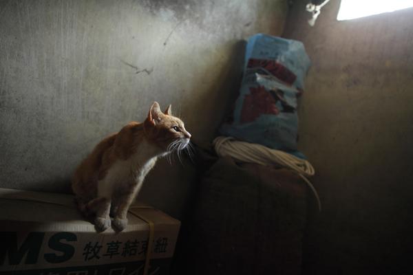 画像6: 曽根原昇さん「ネコとウシの穏やかな関わり」