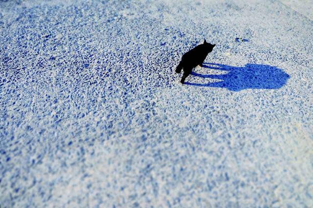 画像2: 金森玲奈さん「街猫日和」