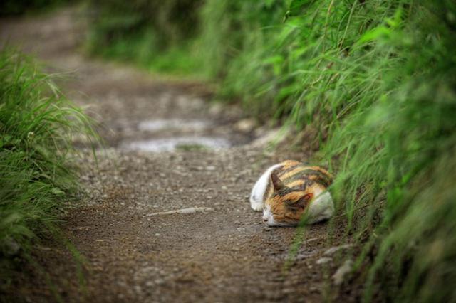 画像1: 曽根原昇さん「ネコとウシの穏やかな関わり」