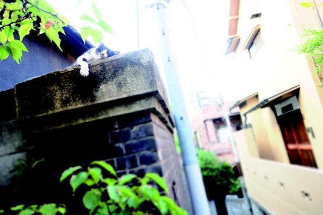 画像5: 金森玲奈さん「街猫日和」