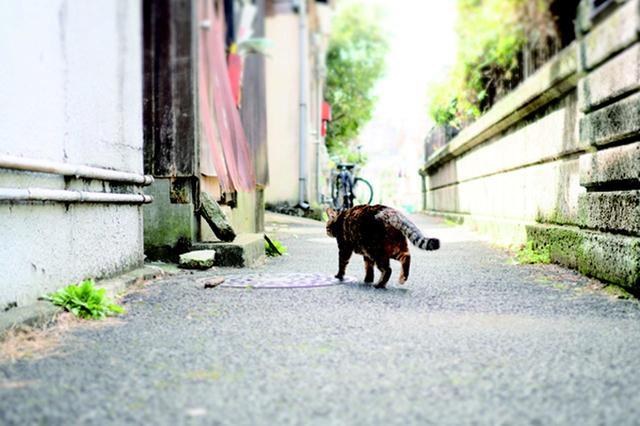 画像9: 金森玲奈さん「街猫日和」